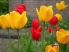 Tulpen - Veere, Holland