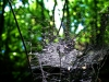 Spinnennetz, Wankum (Wankumer Heide)