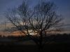 Baum im Ravenvenn, Arcen