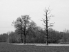 Bäume am Niederrhein