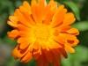 Blüte im Garten