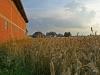 Scheune und Getreidefeld