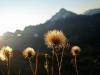Blumen am Mindelheimer Klettersteig