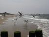 Am Strand kurz vor Domburg