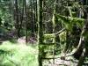 Moosverhangener Wald