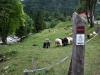 Soca-Weg beim Camp Korita